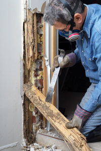 pest inspections dedham